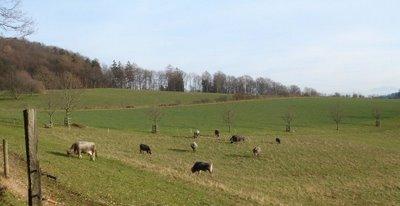 Egghof Kühe